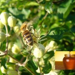 Μέλι Θυμάρι + Ευκάλυπτος + Αγράμπελη + Λυγαριά