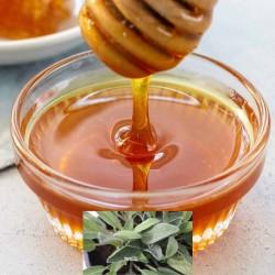 Μέλι Φασκόμηλο